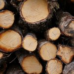 The one thing that you don't want to have in your IT department is dead wood